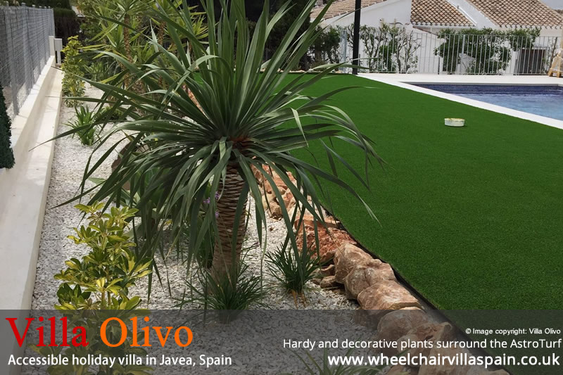 Hardy and decorative plants surround the AstroTurf