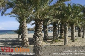 Palm trees at Arenal beach Javea